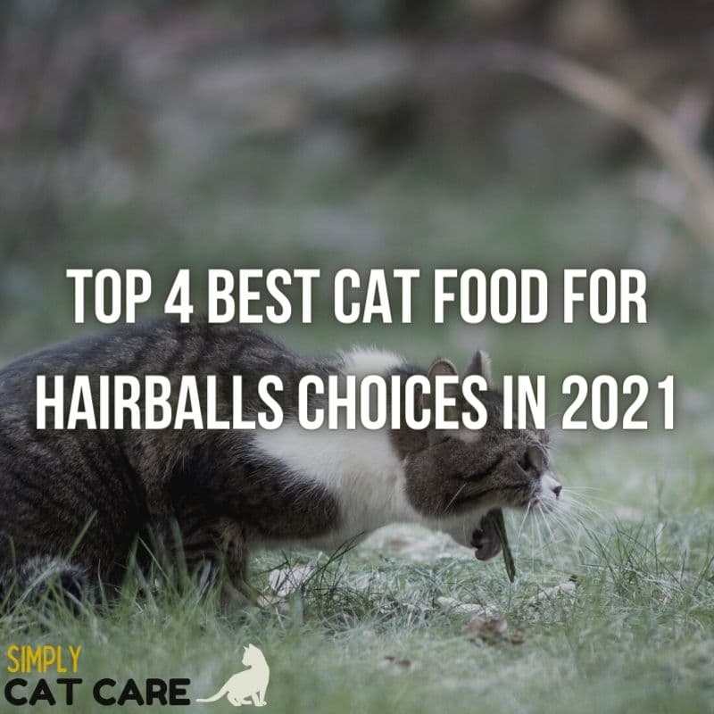 4 Best Cat Food for Hairballs Choices 2021