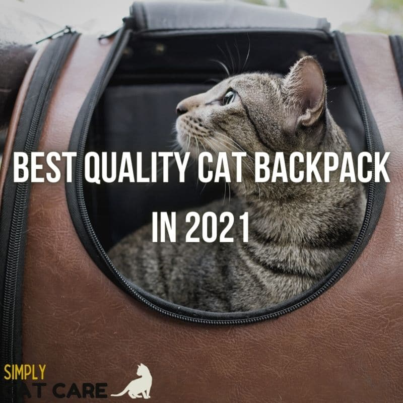 The Best Quality Cat Backpack Guide 2021