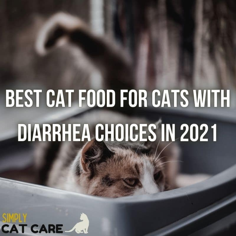 Best Cat Food for Cats with Diarrhea 2021