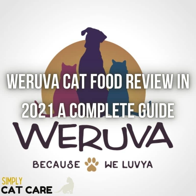 A Complete Weruva Cat Food Review in 2021