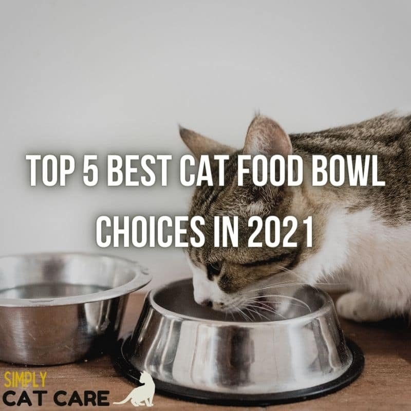 Top 5 Best Cat Food Bowl Choices in 2021