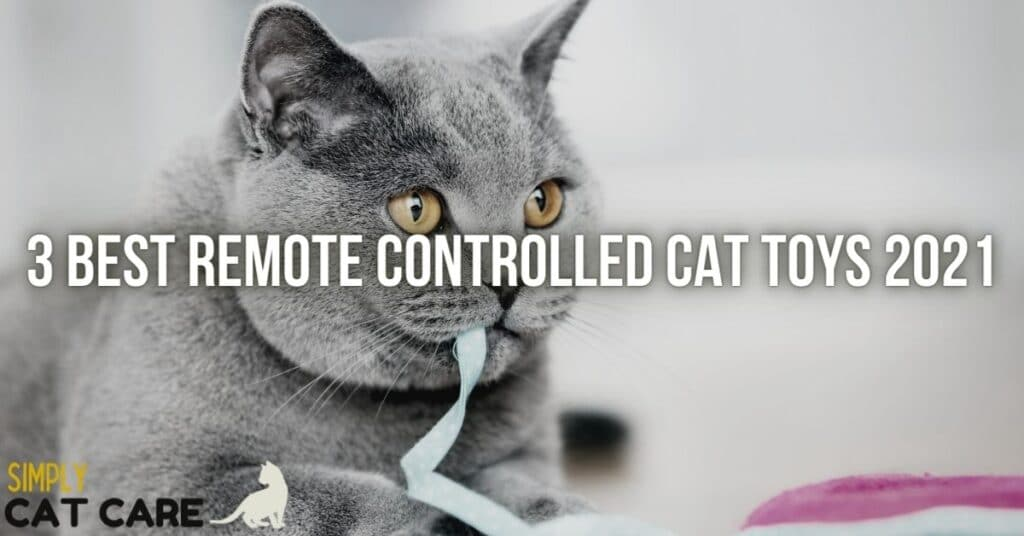 Best remote controlled cat toy