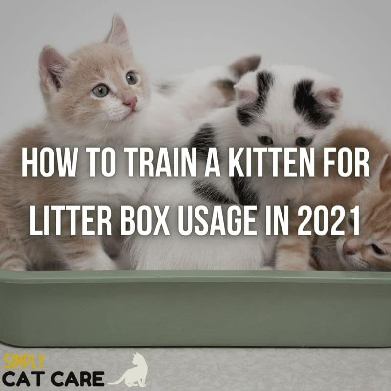 How To Train A Kitten For Litter Box Usage Easily in 2021