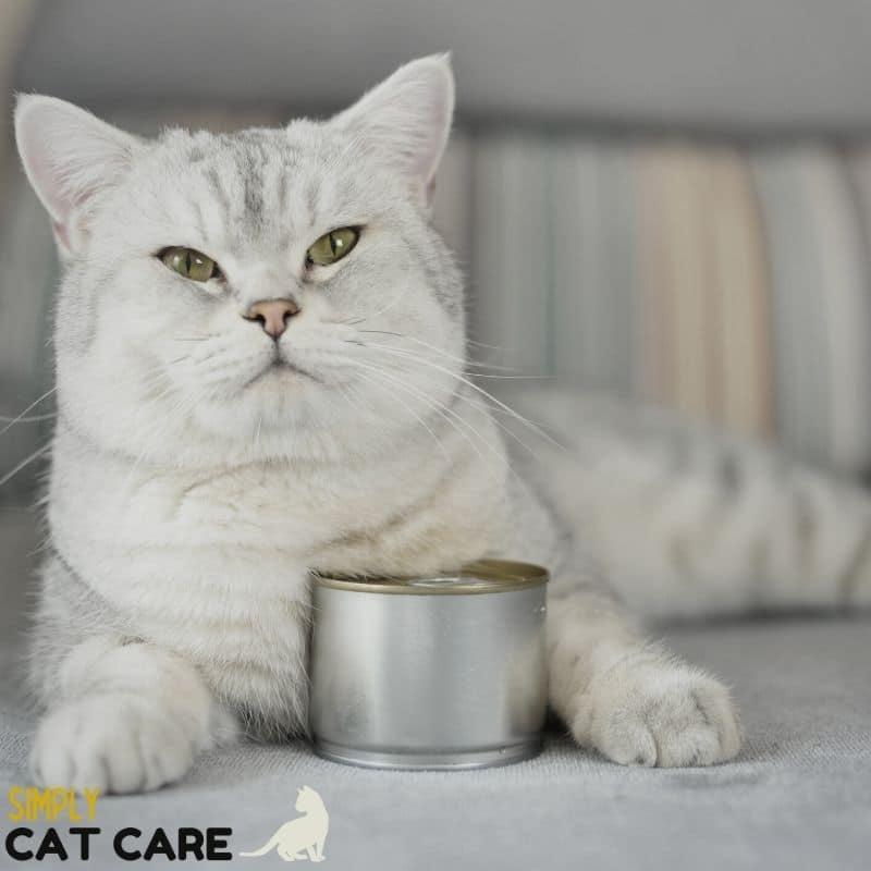 Simply Cat Care