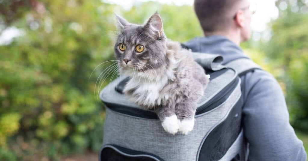 Best quality cat backpack