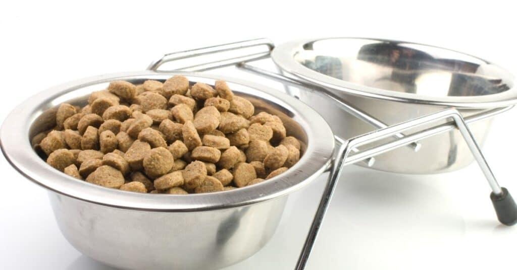 Best cat food bowl