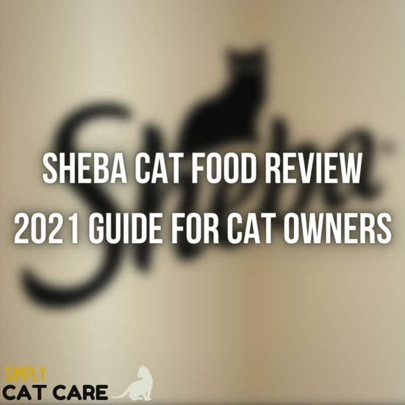 A Complete Sheba Cat Food Review in 2021