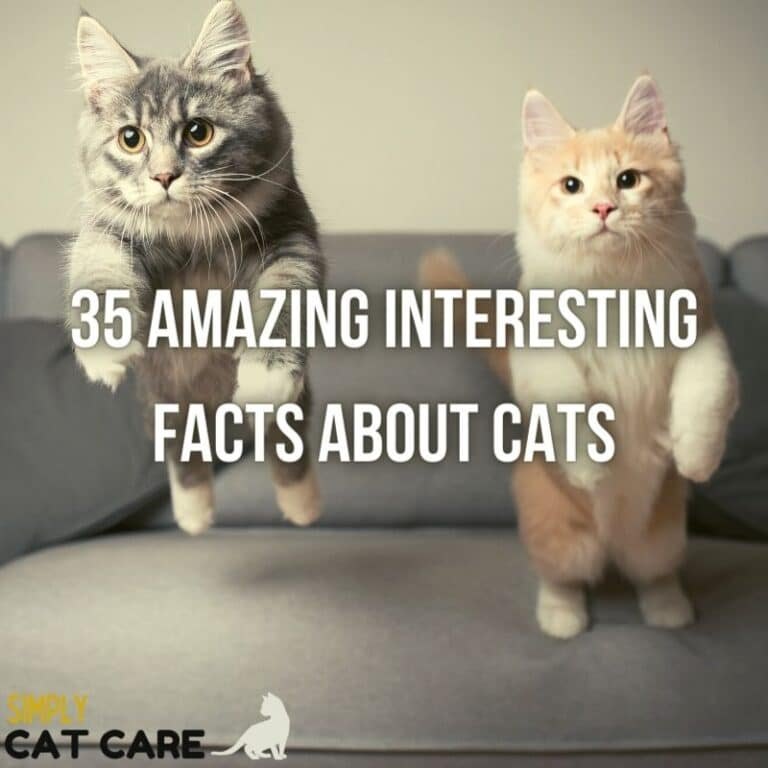 35 Amazing Interesting Facts About Cats