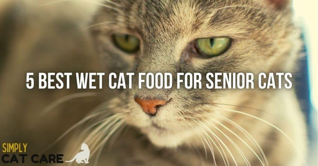 Best wet cat food for senior cats
