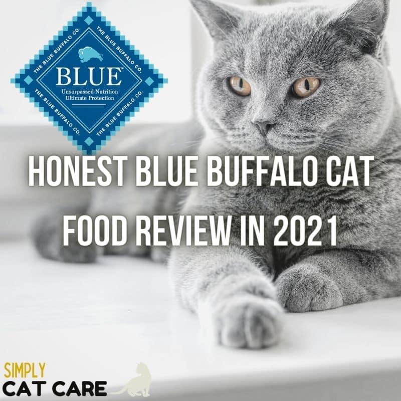 Honest Blue Buffalo Cat Food Review 2021