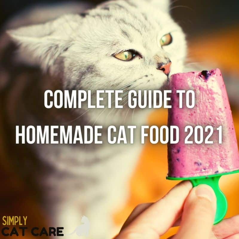 Complete Guide to Homemade Cat Food 2021