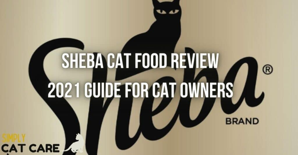 Sheba cat food review
