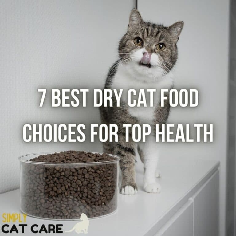 7 Best Dry Cat Food Choices For Top Health