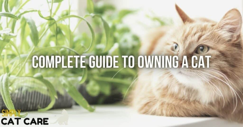 Guide to owning a cat