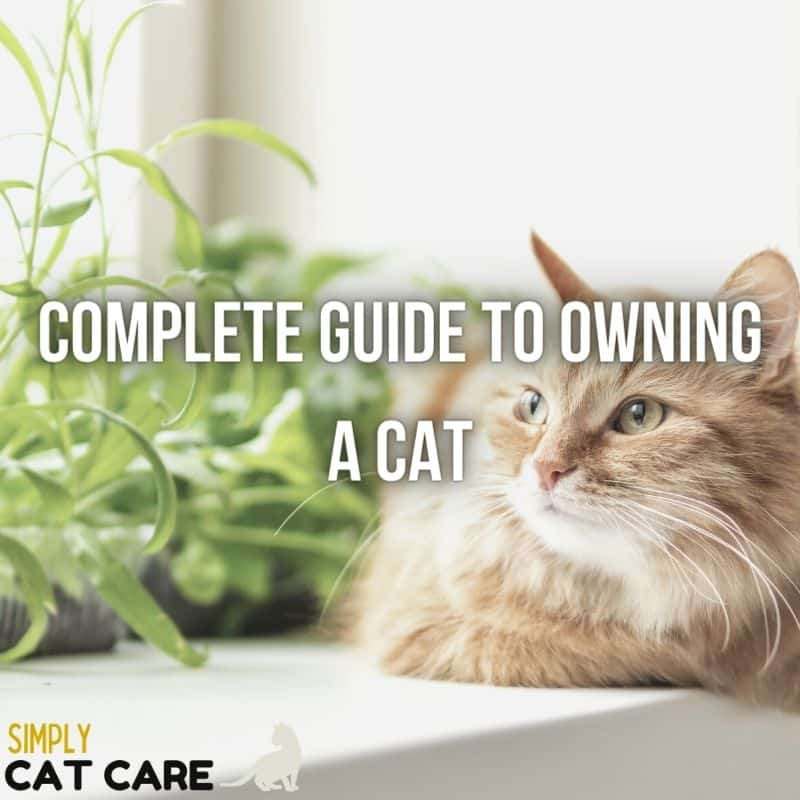 Complete Guide To Owning A Cat in 2021