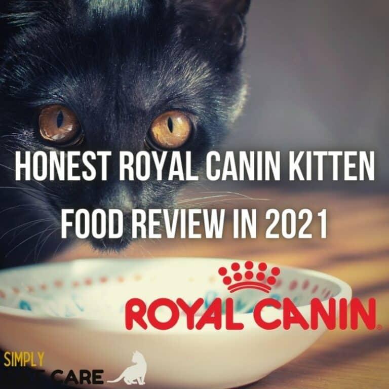 Honest Royal Canin Kitten Food Review 2021